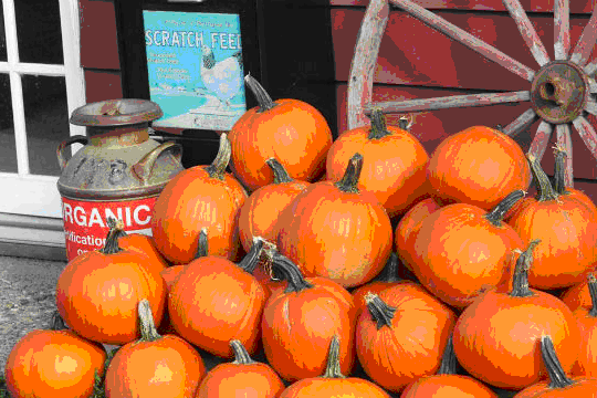 Pumpkins at the Mount Pleasant Farmers Market | Facebook photo